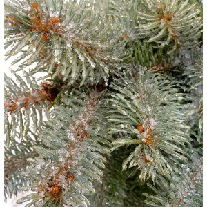 ice on an evergreen tree after a storm