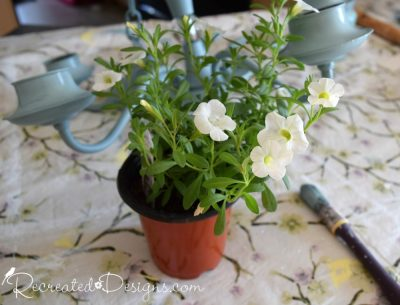 white flowers in a plastic pot