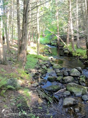 stream amongst the trees