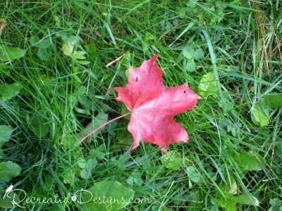 a red maple leaf on green green grass
