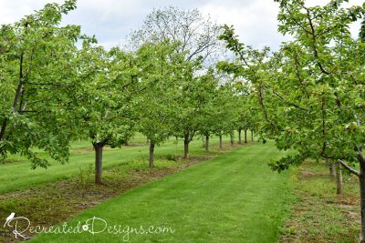 fruit trees in the Niagara region of Ontario in Spring