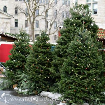 Christmas trees lined up at the German Christmas Market in Quebec City