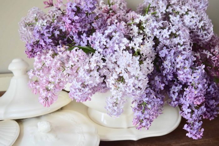 fresh lilacs and Ironstone tureen with lids
