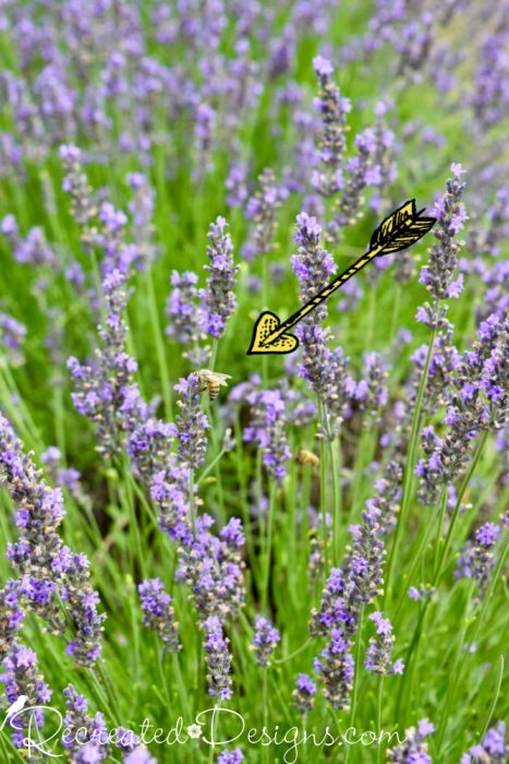 a little bee on a Lavender stem