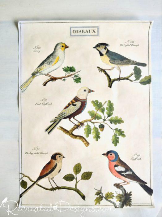 oiseaux paper Cavalini