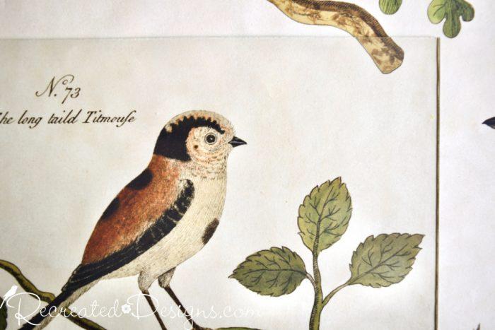 cavallini oiseaux paper