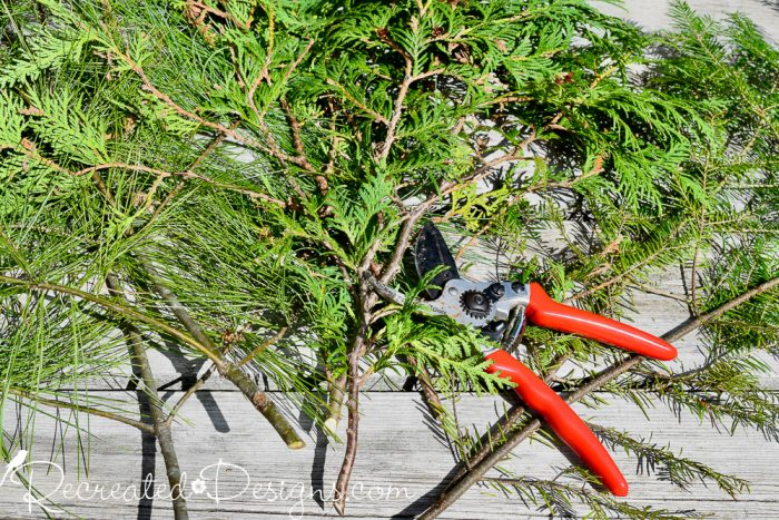 cut evergreen branches