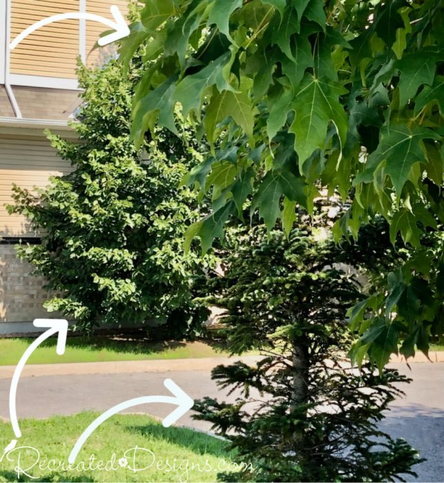 different trees in a small space