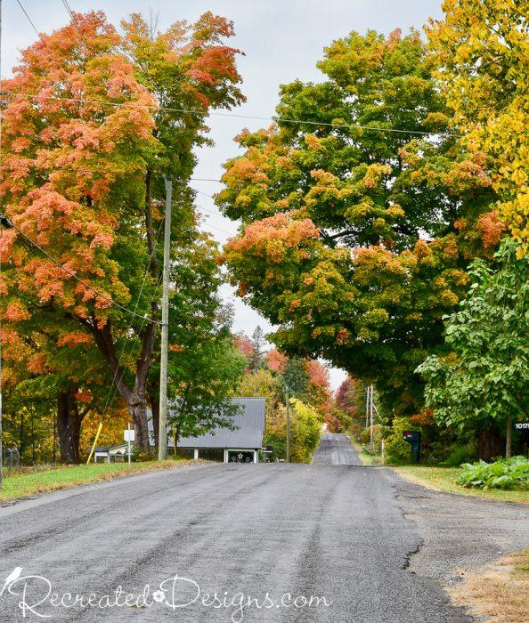 beautiful fall leaves in rural Ontario