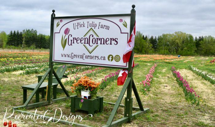 Green Corners tulips farm