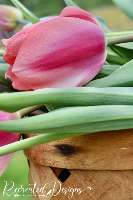 pink tulip laying on a basket