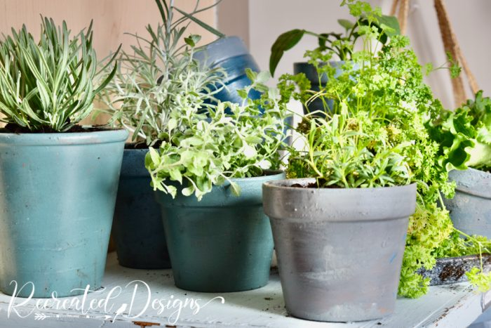 painted clay pots with plants
